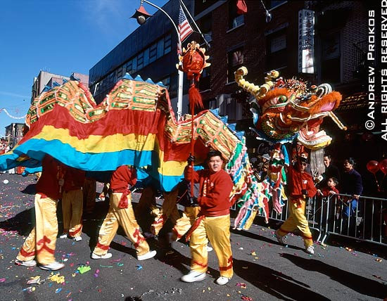 A large dragon parades through Chinatown during the Chinese New Year parade, New York City