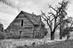 Black and white photo of an abandoned homestead in Biglow Canyon, Oregon.