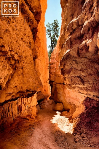 A cavern on the Navajo Trail, Bryce Canyon Utah