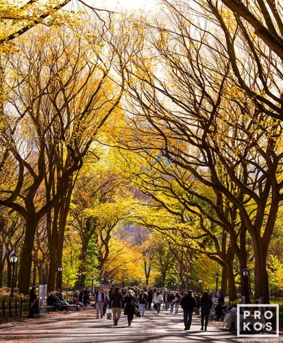 A view of Poet's Walk in Central Park in Autumn, New York City