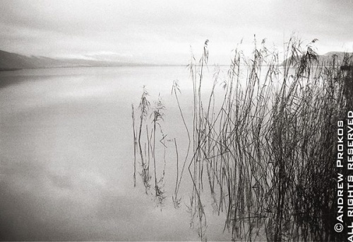 A landscape showing reeds in Lake Pamvotis, Ionnina, Epirus, Greece -