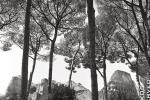 palatine hill trees