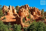 A view of Red Canyon in the Dixie National Forest, Utah