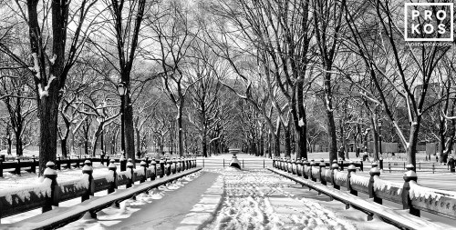 A panoramic view of the snow covered benches of Central Park in Winter in black and white, New York City