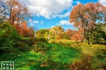 A landscape photo of the Meadow in Central Park in Autumn, New York City