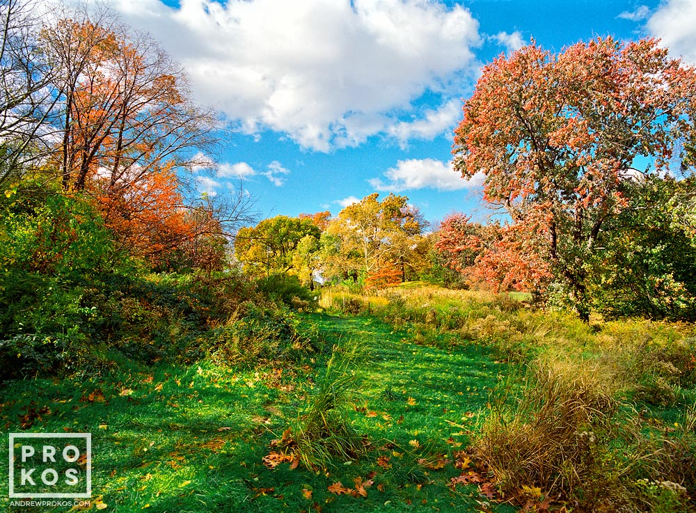 The Meadow in Central Park in Autumn, New York City