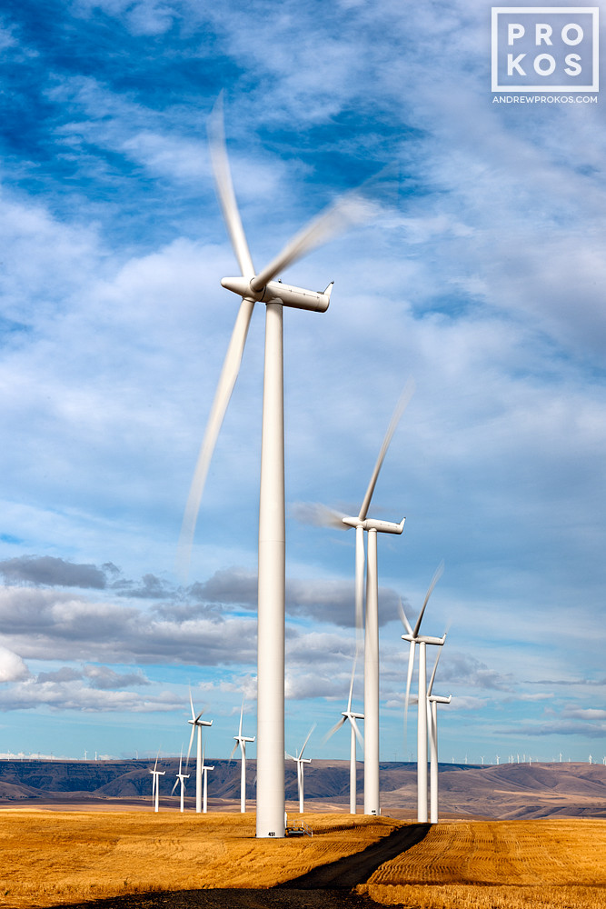 A landscape photo of a row of wind turbines in motion at the Biglow Canyon, Oregon wind farm