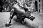 A black and white fine art photo of the famous charging bull statue in New York's Financial District