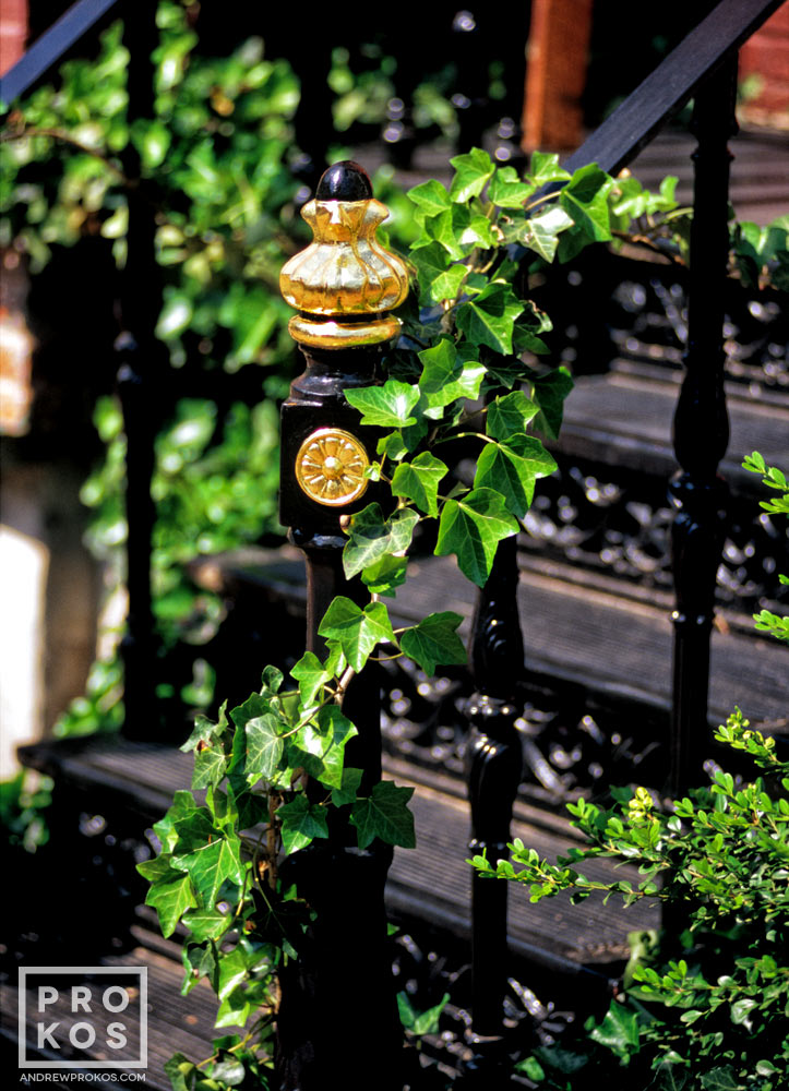 An ivy-covered cast-iron banister from a home in Georgetown, Washington DC
