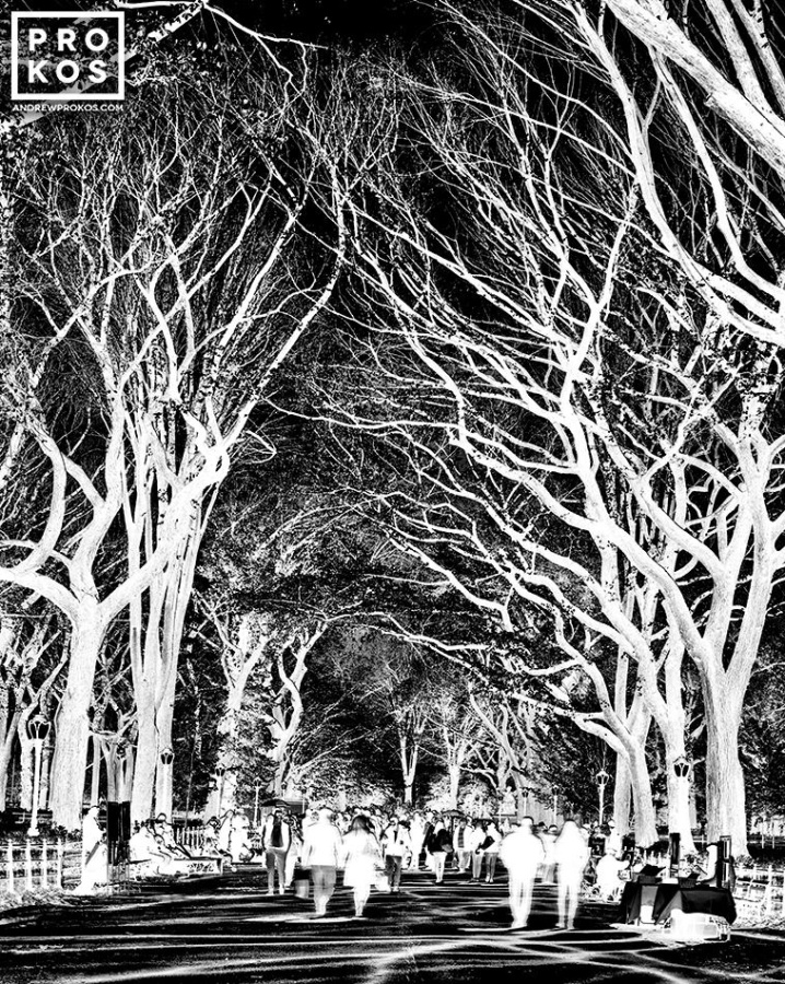A large-format black and white photograph of Central Park from Andrew's fine art series Inverted.