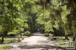 A landscape photo from the Jardim Botanico in Rio de Janeiro.