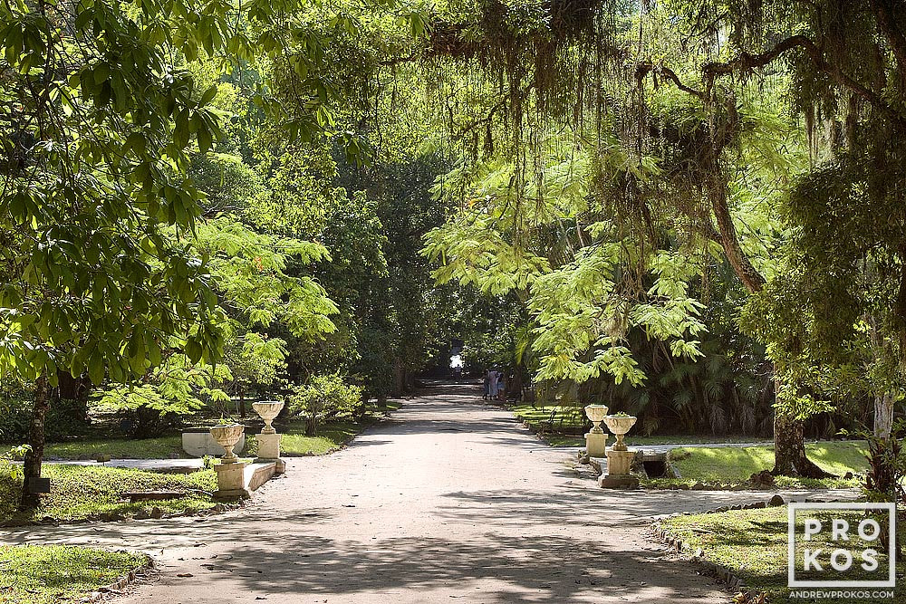A landscape from the Jardim Botanico in Rio de Janeiro.