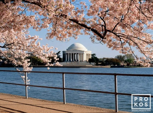 A view of the Jefferson Memorial across the Tidal Basin framed by Spring cherry tree blossoms, Washington DC