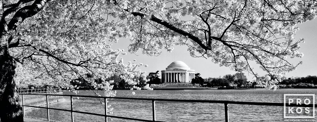 Jefferson Memorial Cherry Blossom Panorama BW