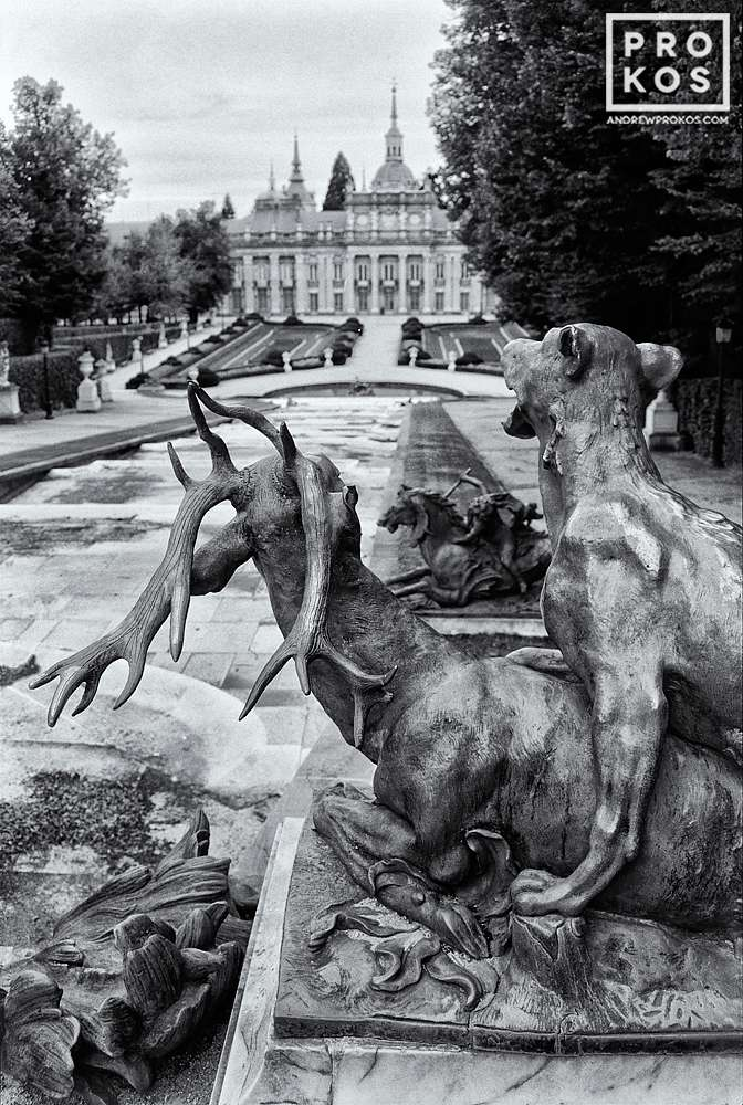 Statue of a lion with a stag in the gardens at La Granja de San Ildefonso, Spain in black and white