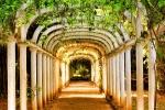 A covered path of green vines in the Jardim Botanico of Rio de Janeiro, Brazil. Um caminho coberto de videiras verdes no Jardim Botânico do Rio de Janeiro.