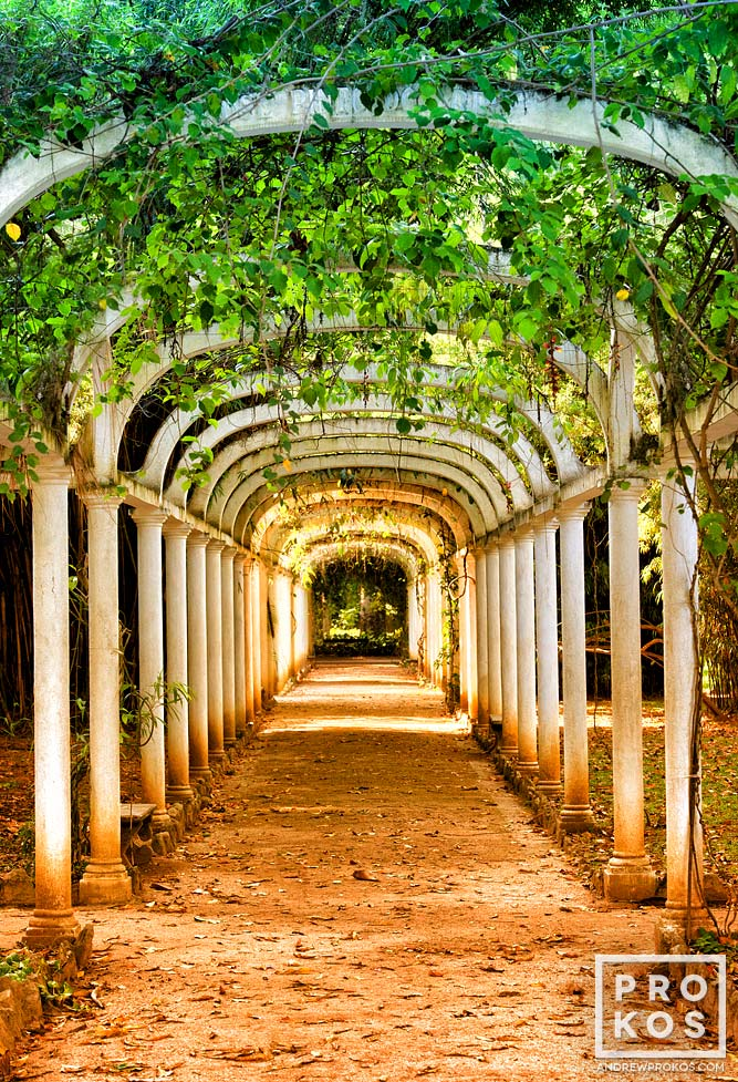 A covered path of green vines in the botanic garden (Jardim Botanico) of Rio de Janeiro, Brazil.