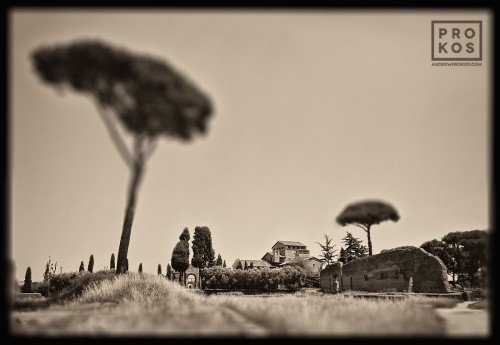 "A landscape with tall plane trees from the Palatine Hill in Rome, Italy. From the monochrome photo series ""Forum Romanum"""
