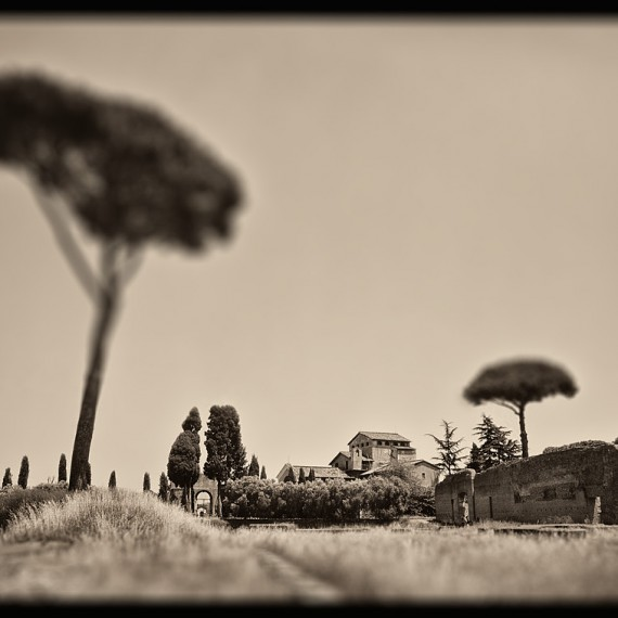 A landscape with tall plane trees from the Palatine Hill in Rome, Italy. From the monochrome photo series